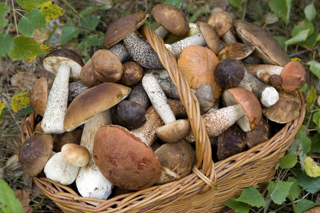funghi-benefici-benessere-como