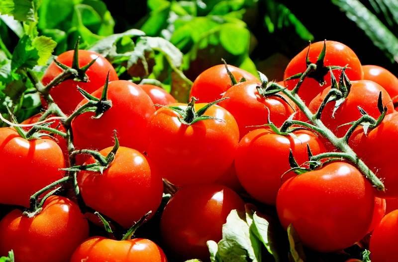 pomodoro-benessere-organismo